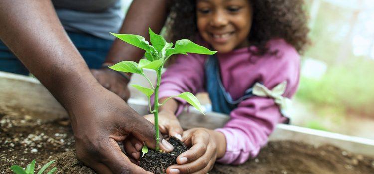 Tips on Gardening for Beginners!